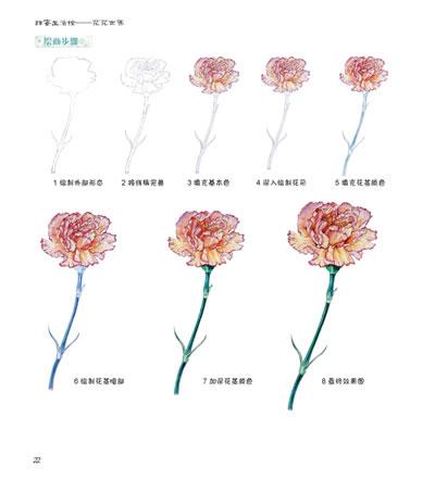 木槿花铅笔手绘图片
