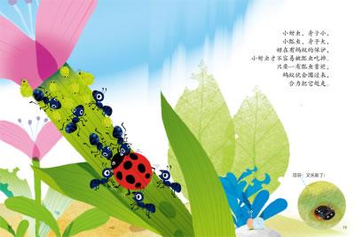 蚂蚁成长步骤图片大全