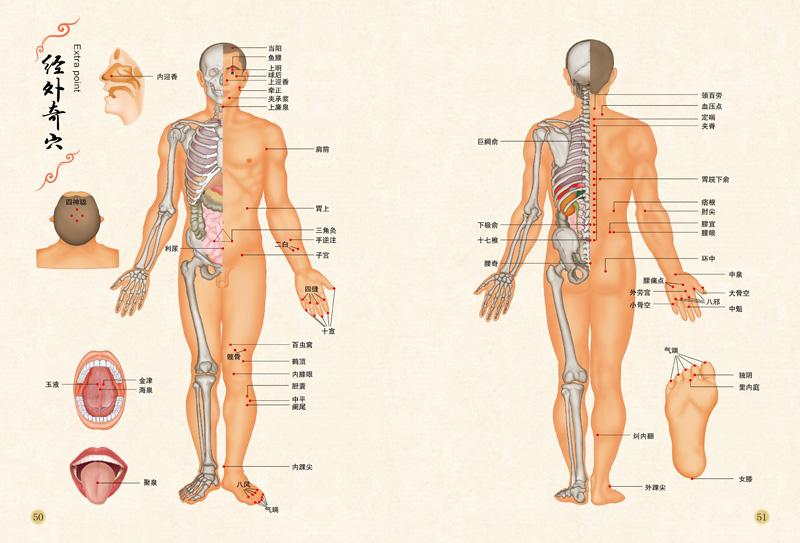 求些有图解人体经络 穴位的书本
