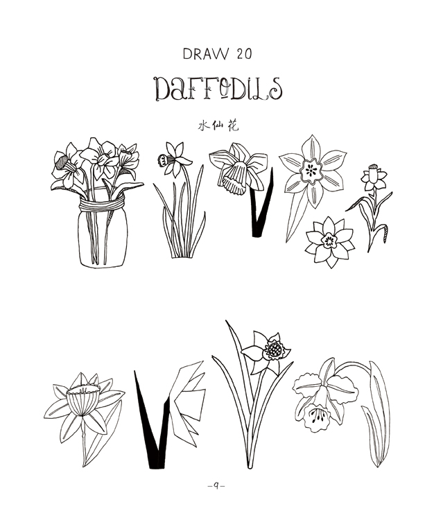 罂粟花手绘线条