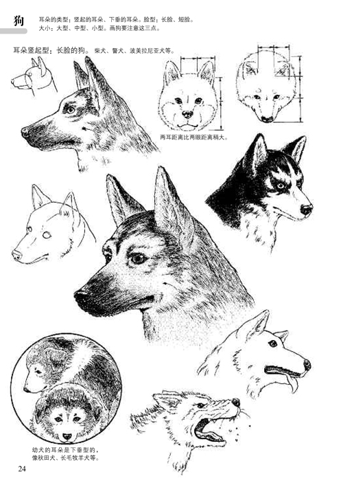 教程11:动物的画法》(