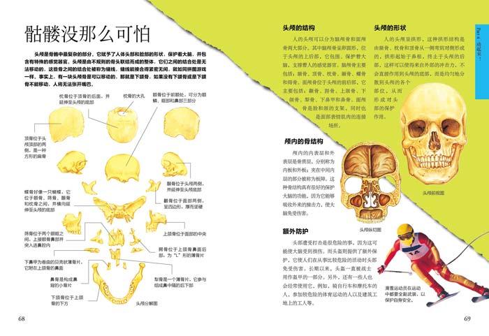 细胞膜结构框架图