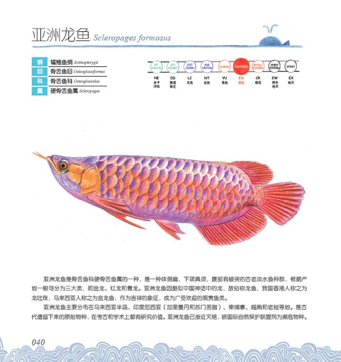 学画画识百科.海洋绘1:美丽的鱼类