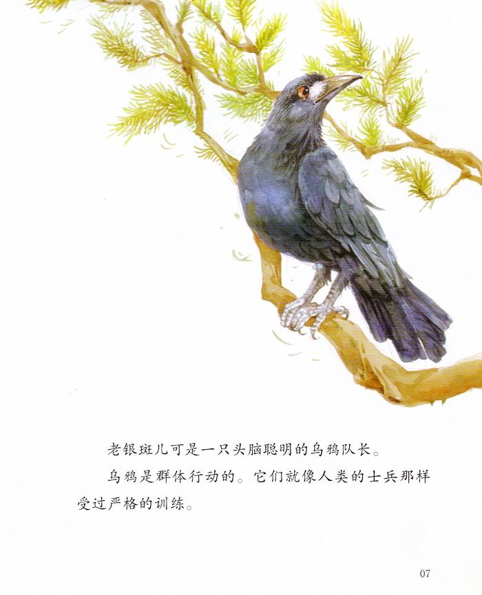 《绘本西顿动物故事(全8册)》((加)欧·汤·西顿.)
