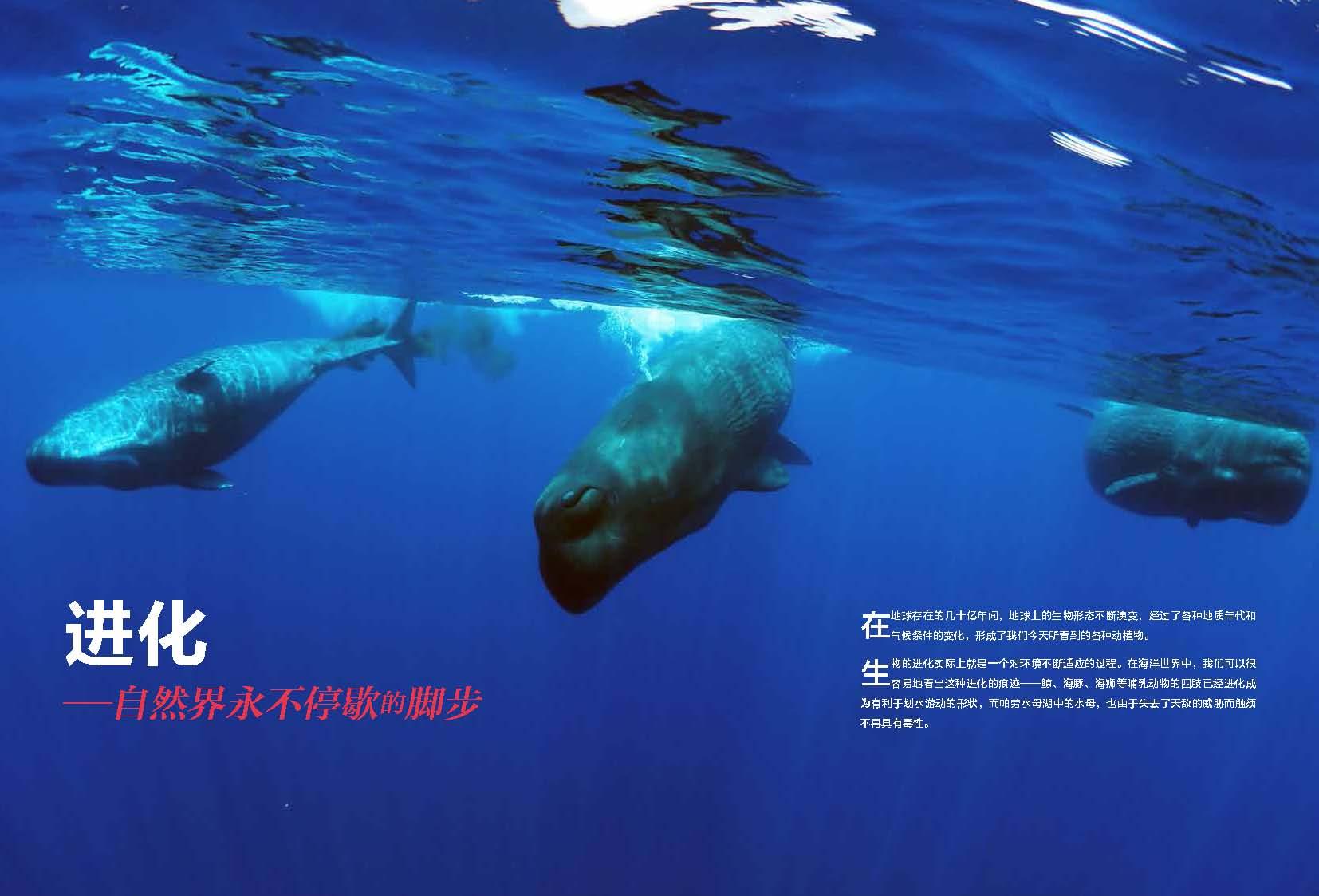 海洋原索动物图片
