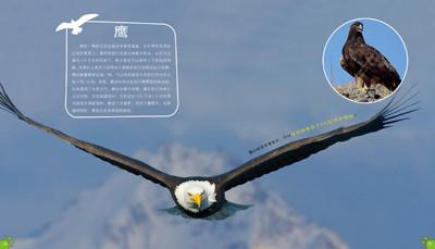 【正版】现货 100种本领非凡的动物·动物中的