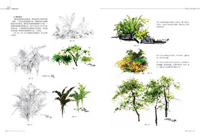 植物及花卉画法