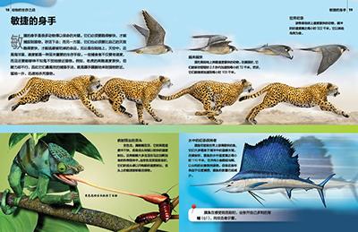 种猫科动物如狮子,虎,猎豹和花豹的捕食, 抚育幼兽,生活环境,身体特征
