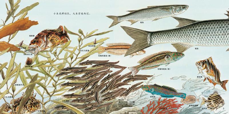 正版童书 海边的动物 启发绘本 精装 松冈达英