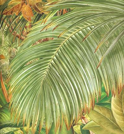 动物大搜索――热带雨林