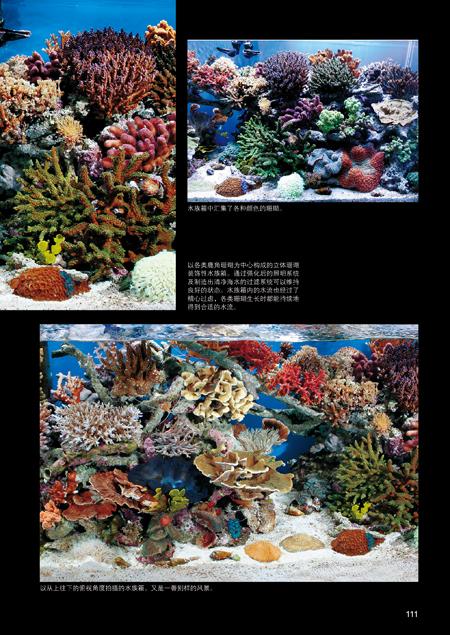 珊瑚图鉴:不可思议的珊瑚鉴赏图典(色彩斑斓的珊瑚写真,让你过目难忘