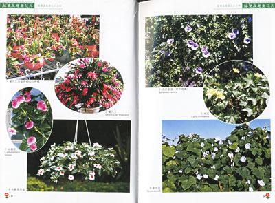内容简介 藤蔓及悬垂花卉是室内外垂直绿化的主力军,它们不仅可以