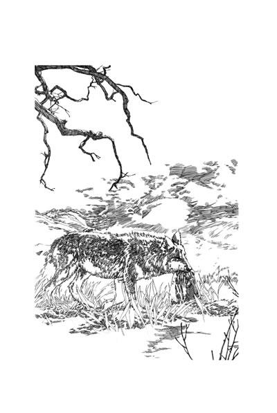 中国动物文学大系·静静的白桦林