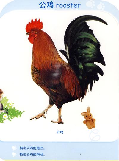分阶段早教系列·小脚印阶梯认知纸板书·动物