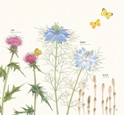 描摹水彩花卉的美丽世